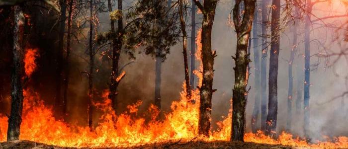 Incendi in Sardegna, Solinas chiede a Draghi una parte del Pnrr per la riforestazione