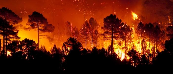 Incendi in Sicilia, Draghi firma il decreto sulla mobilitazione nazionale