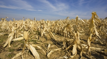 Cambiamenti climatici, gravi danni per il settore agricolo italiano